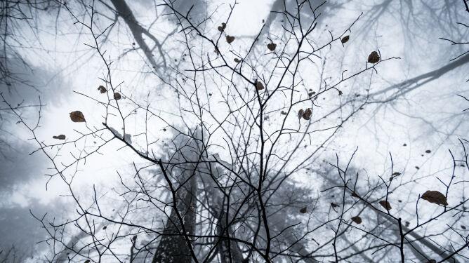 Pogoda na pięć dni: nie zabraknie zimowych epizodów