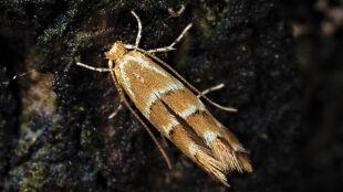 """Nie tylko """"insektokalipsa"""", lecz także inwazja obcych. Dzieje się w świecie owadów w Polsce"""