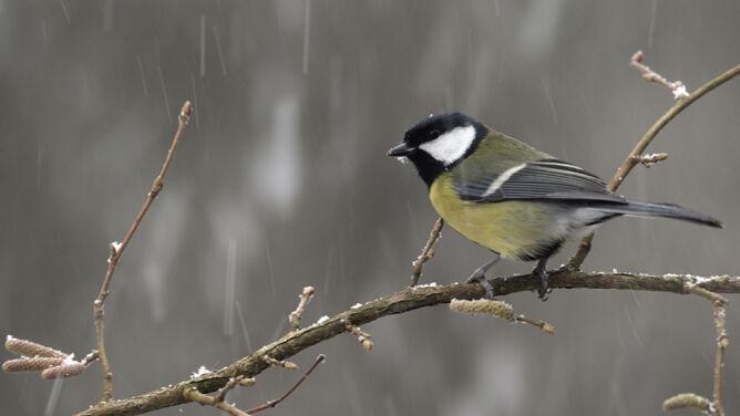 Pogoda na dziś: deszcz, deszcz ze śniegiem i śnieg. A na dodatek silny wiatr