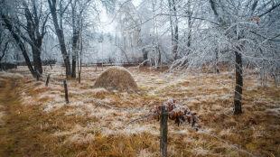 Zimowy początek tygodnia, a koniec - z wiosenną temperaturą